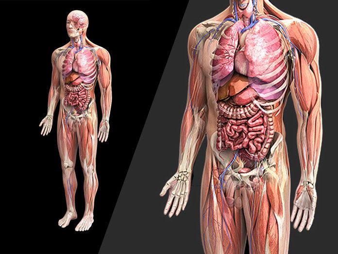Viata şi alcatuirea corpului omenesc, din ce este alcatuit organismul uman