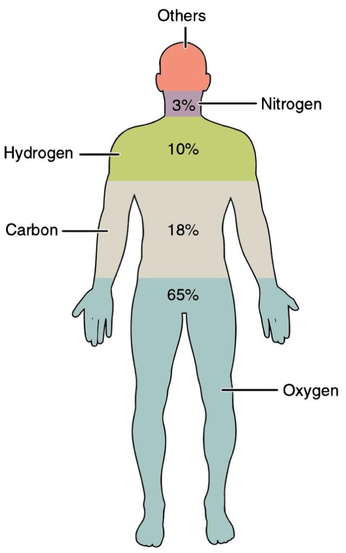 Substantele din care este alcătuit corpul