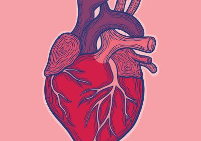 Activitatea inimii