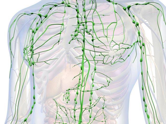 limfa,sistemul limfatic