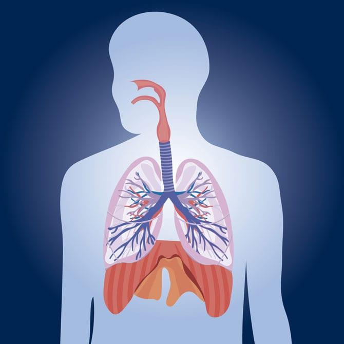 Considerațiuni privind anatomia aparatului respirator și fiziologia respirației. Structura și funcțiile aparatului respirator