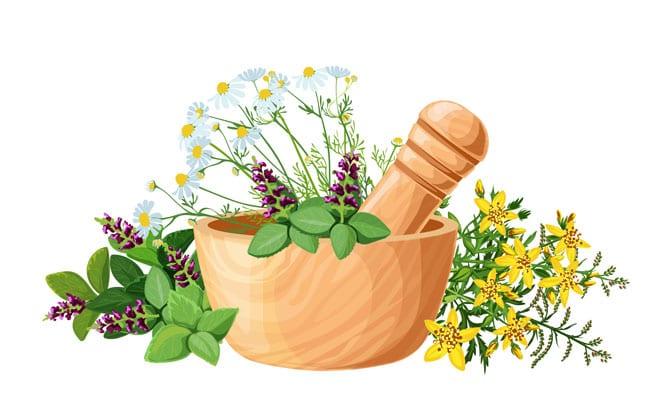 Moduri de folosire plante medicinale