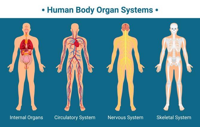 Topografia corpului