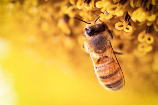 Ce sunt, ce conțin și la ce folosesc produsele apicole?