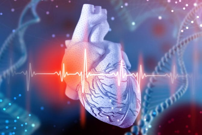 Aparatul cardio - vascular