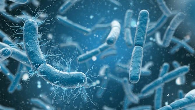 Bacteriile. Ce sunt și cum se manifestă?