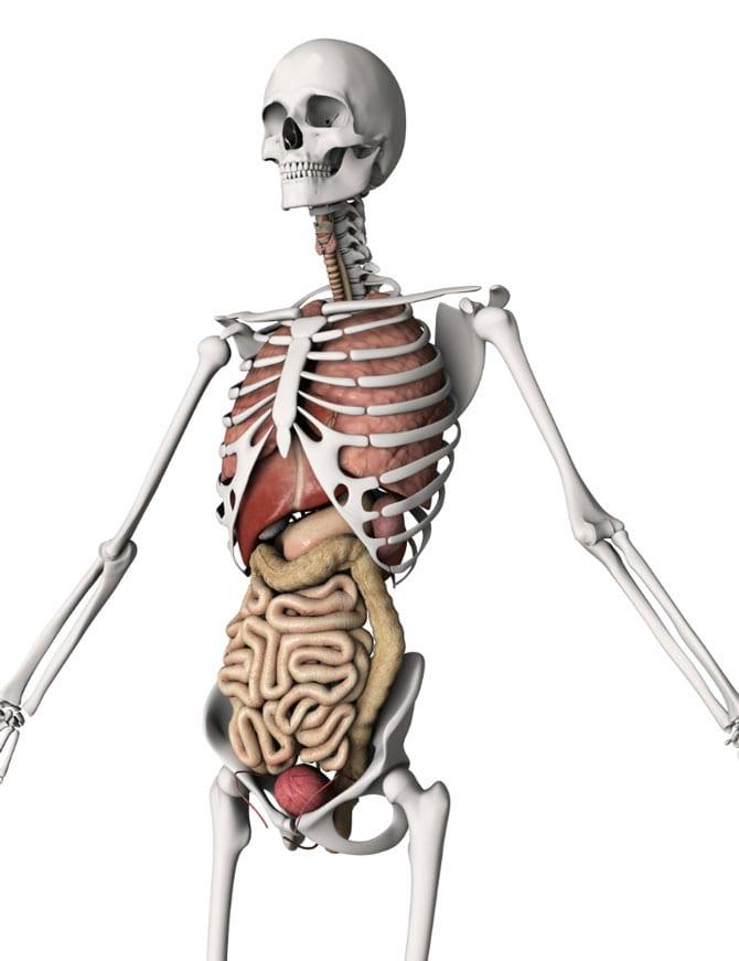 Scheletul corpului uman
